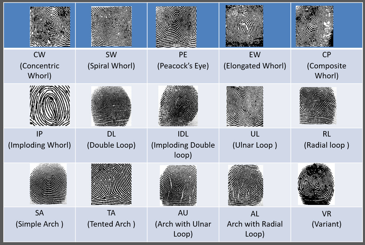 15 Type fingerprints